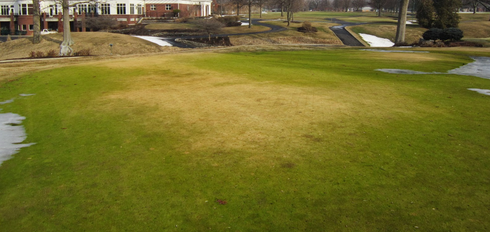Winter Lawn Tips: Winter Desiccation