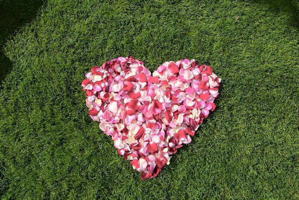 nutrilawn-heart-lawn-wallpaper.jpg