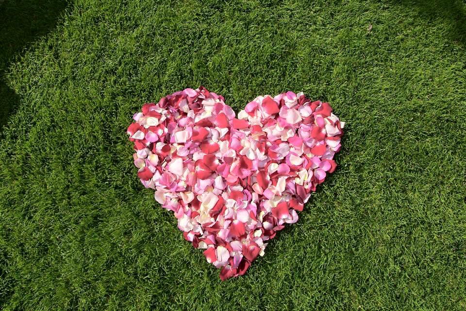 nutrilawn-heart-lawn-wallpaper.jpg