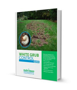 Grub_Ebook_Cover.jpg