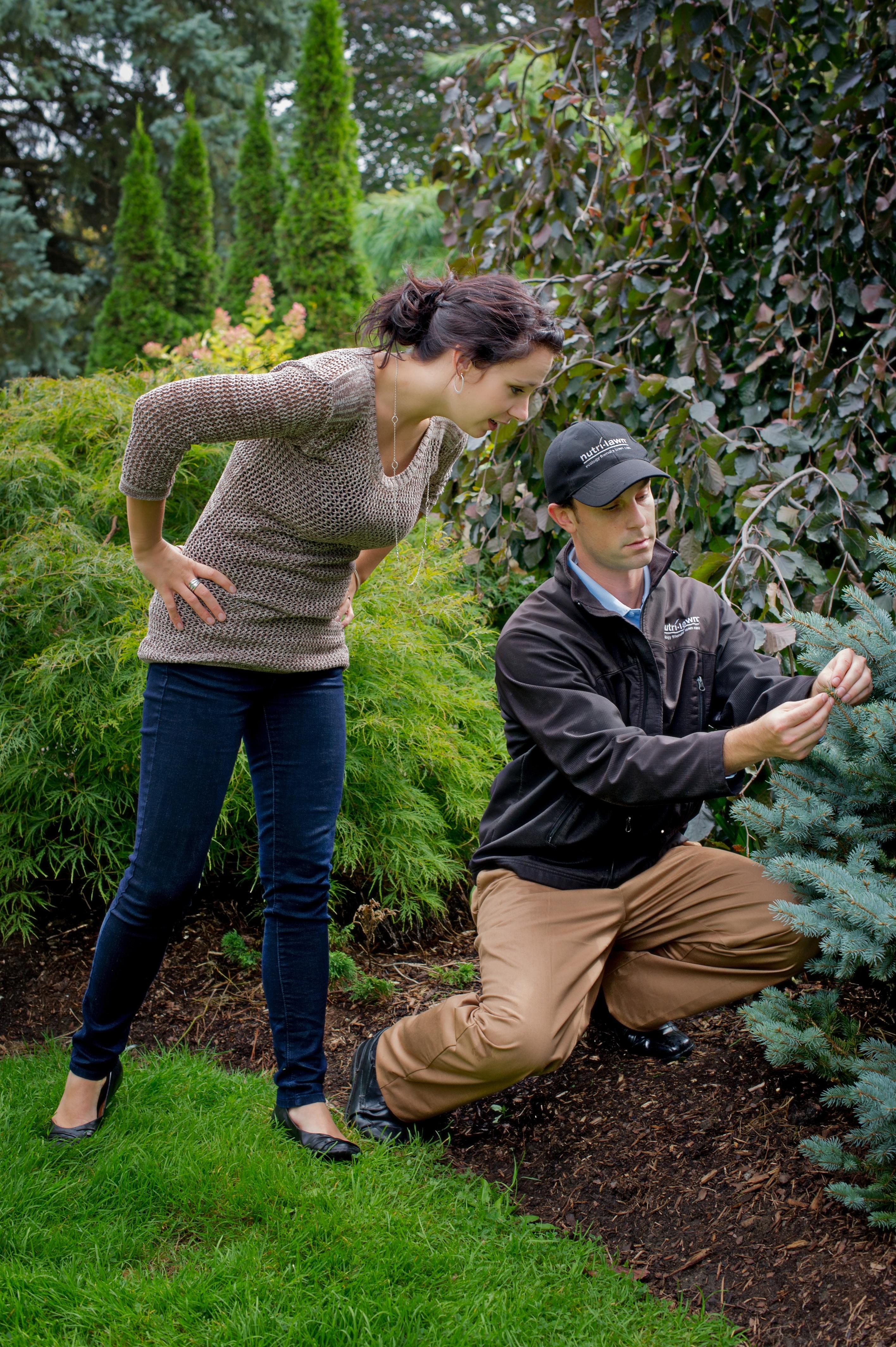 Tree and Shrub Care Service