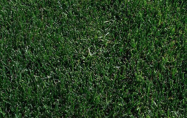 how to get rid of kentucky 31 grass