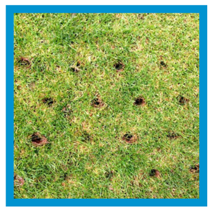 lawn-services-core-aeration.png