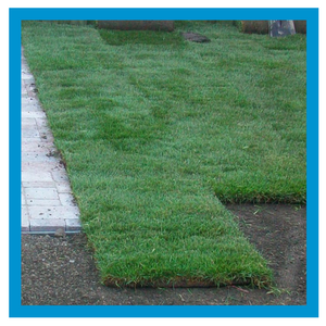 lawn-services-lawn-renovation.png