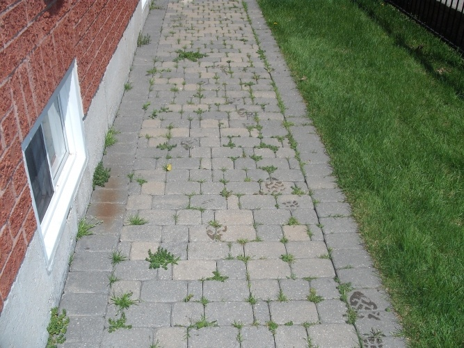 nutrilawn-crack-and-crevice-weeds-growing-in-interlocking_