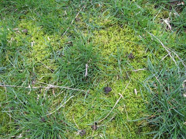 moss removal lawn service
