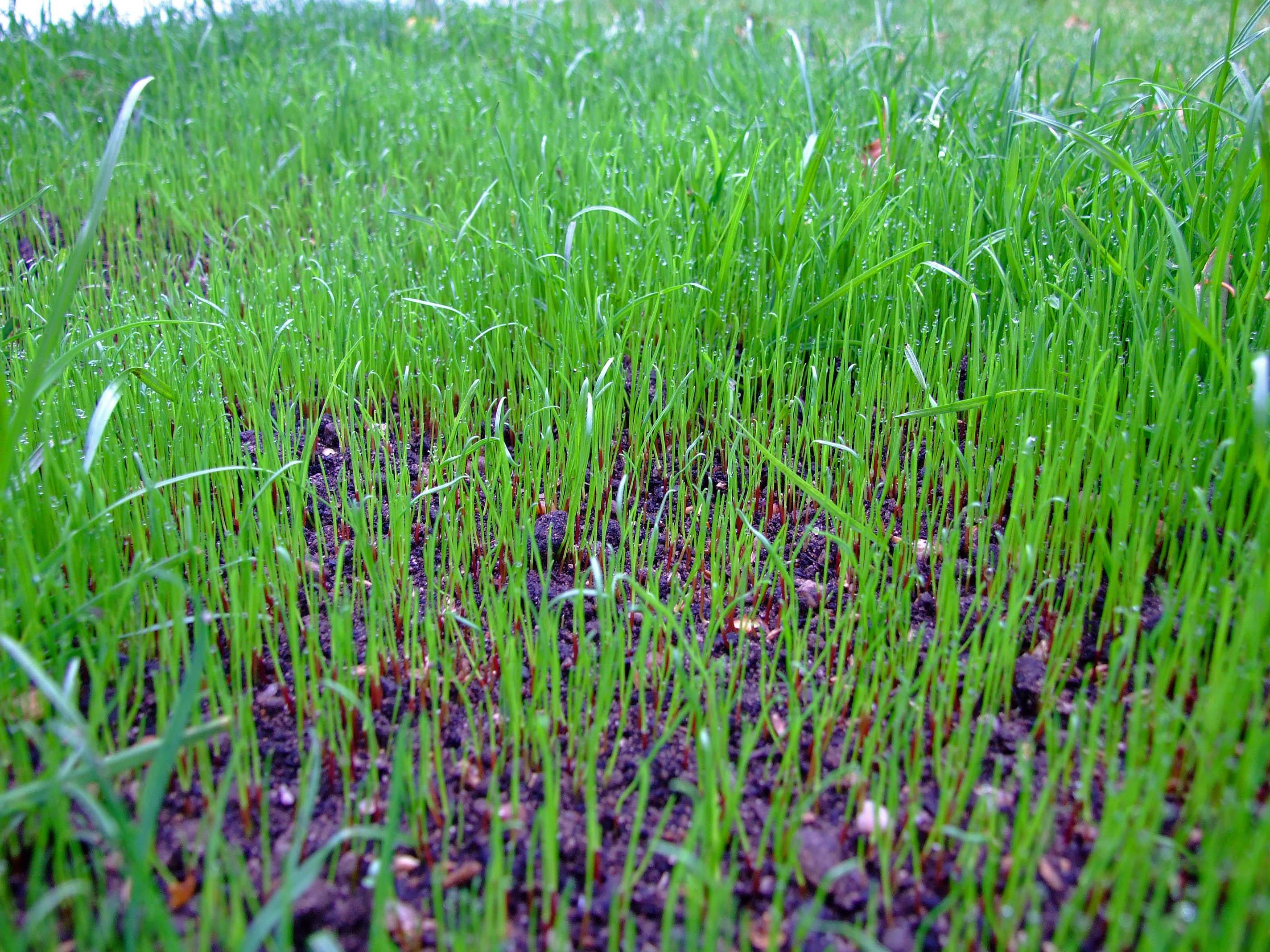 nutrilawn-seed-germination.jpg