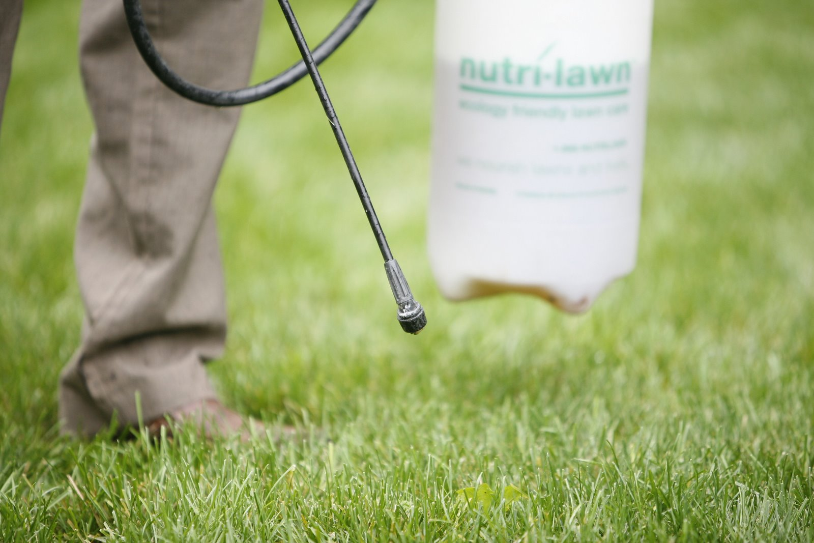 Nutri-Lawn spot weed control service