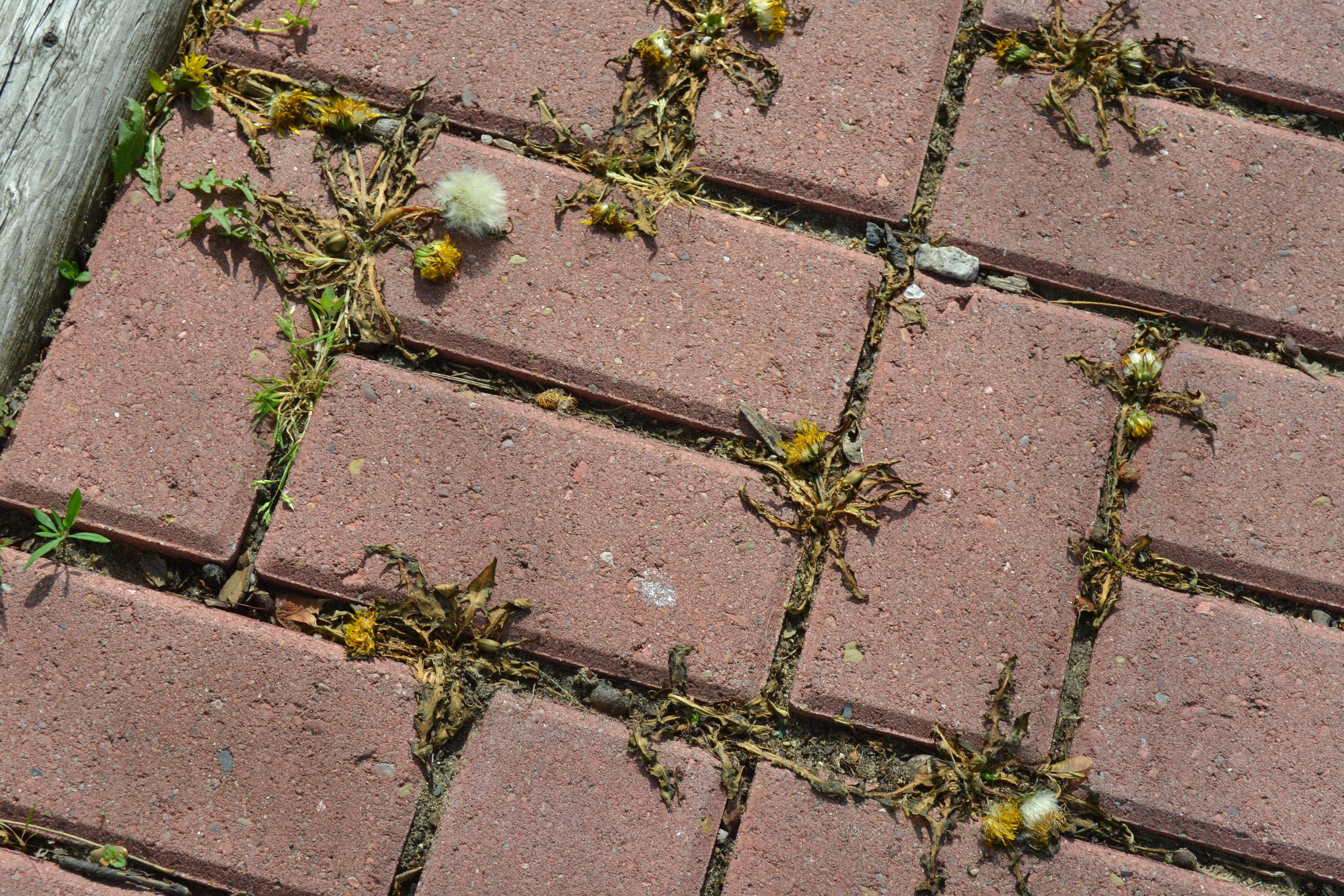weeds-in-cracks-and-crevices.jpg