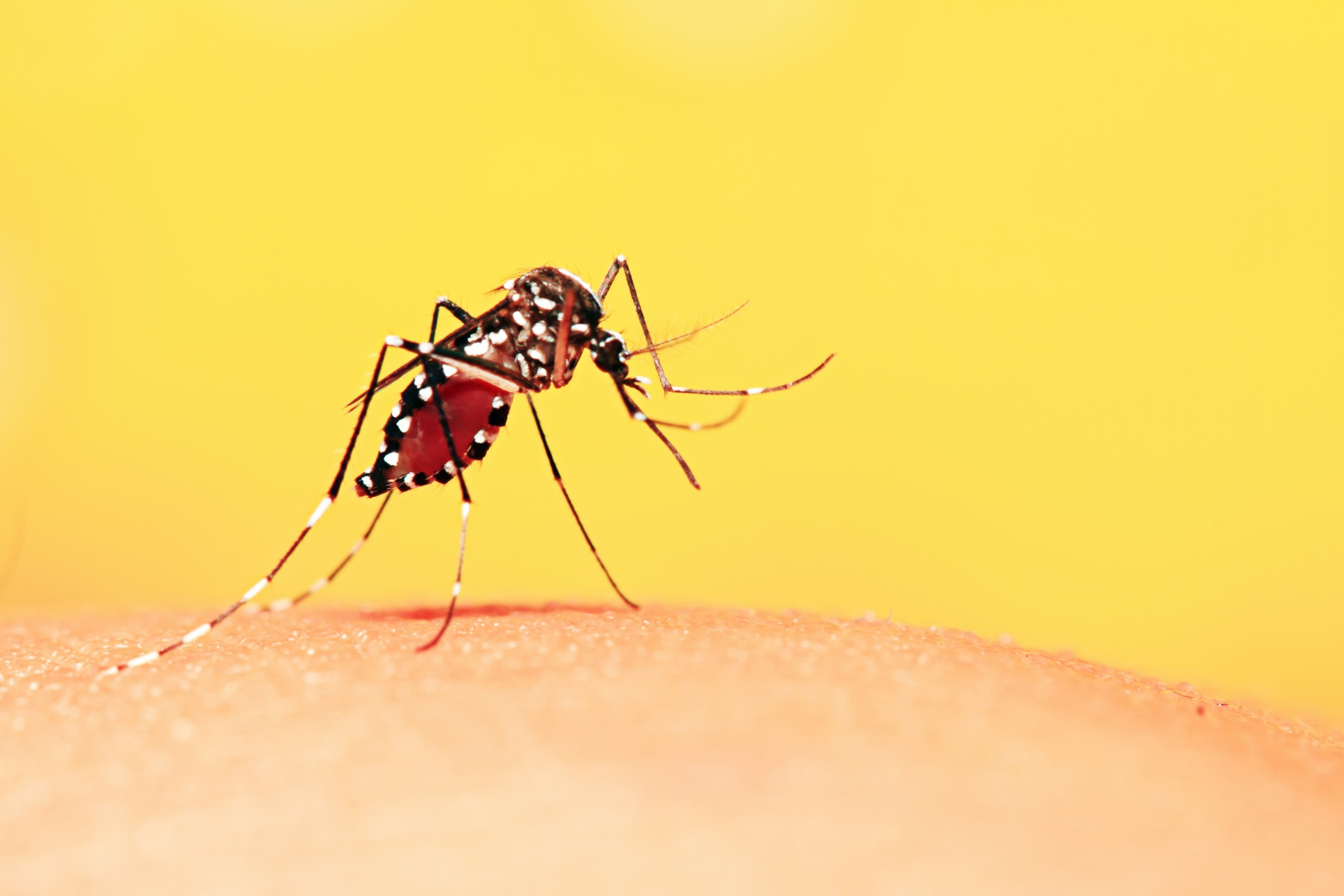 8 common mosquito myths