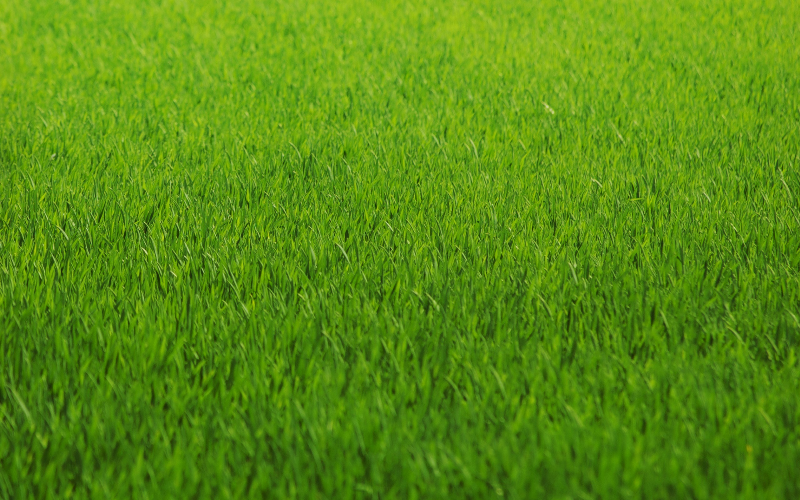 5 August Lawn Care Tips - Featured Image