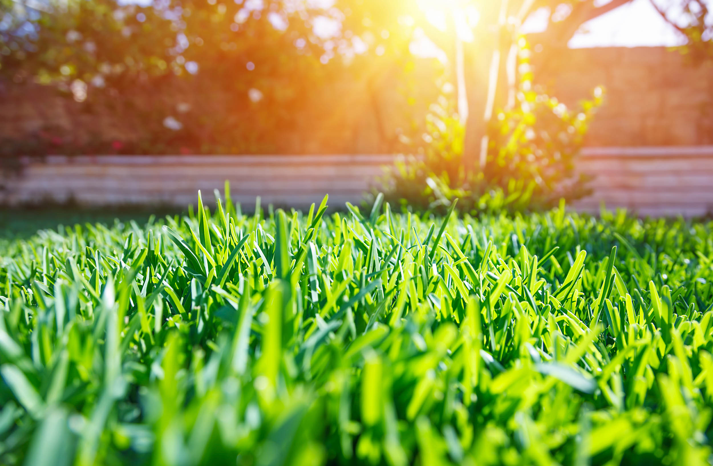 Keep Your Lawn Green In The Summer Heat - Featured Image