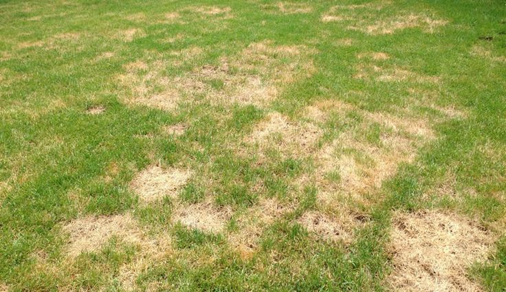 Prevent Summer Heat Damage To Your Lawn - Featured Image